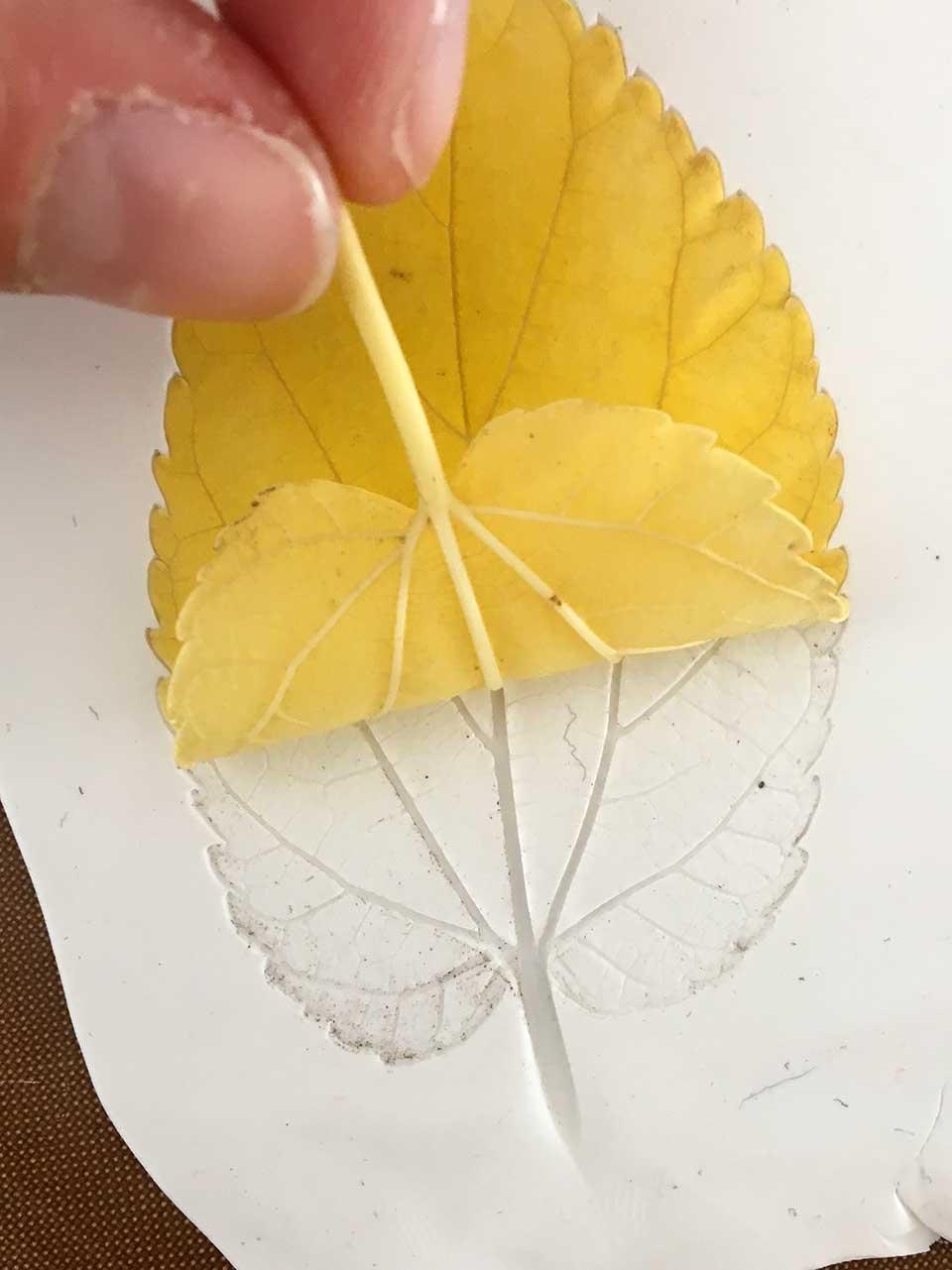 2-leaf-peel