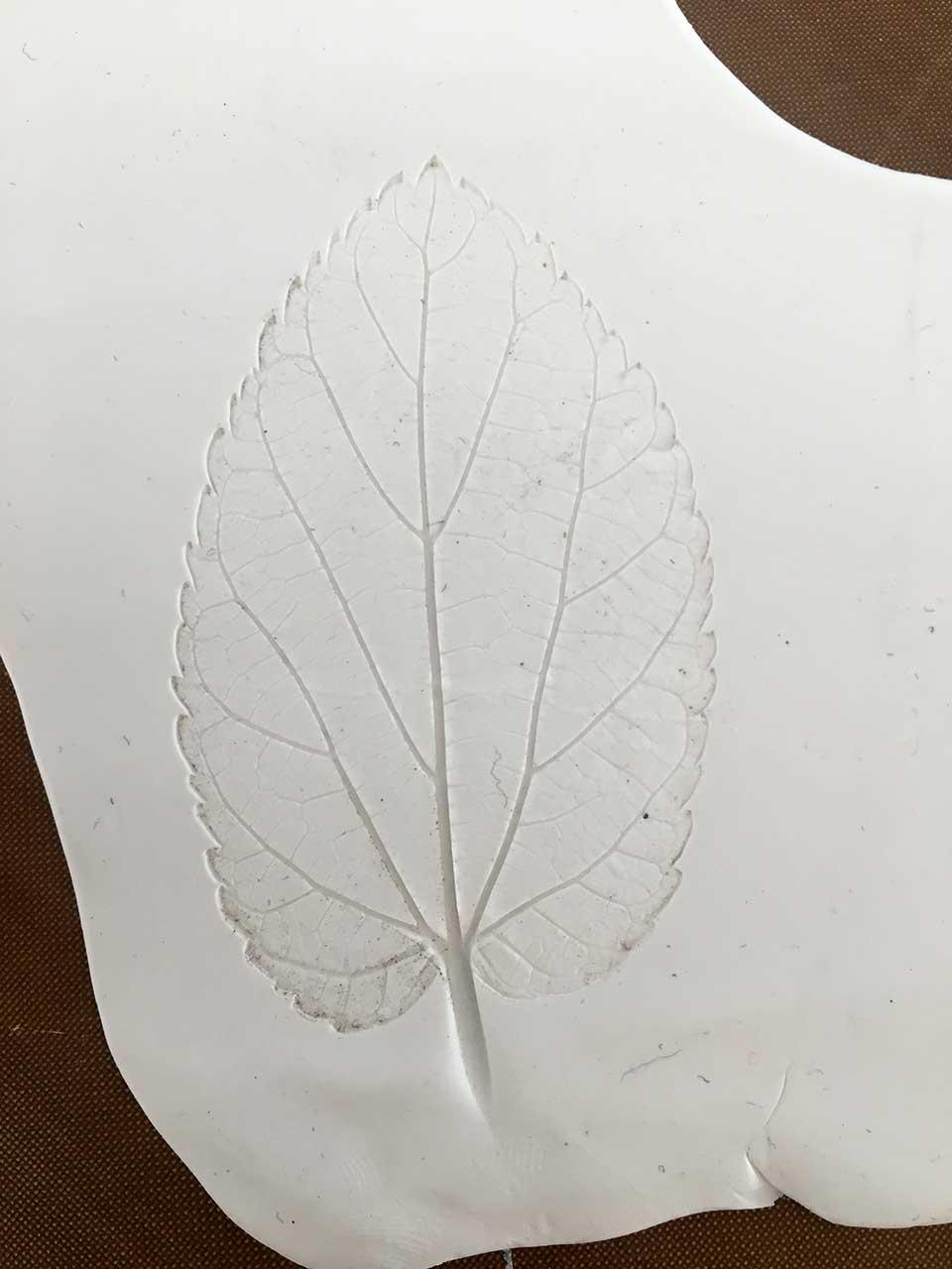 3-leaf-peel-2